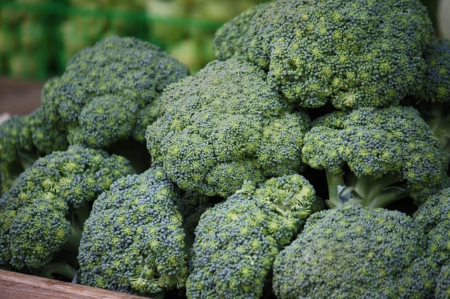 Os brocolos Portuguese translation of Broccoli
