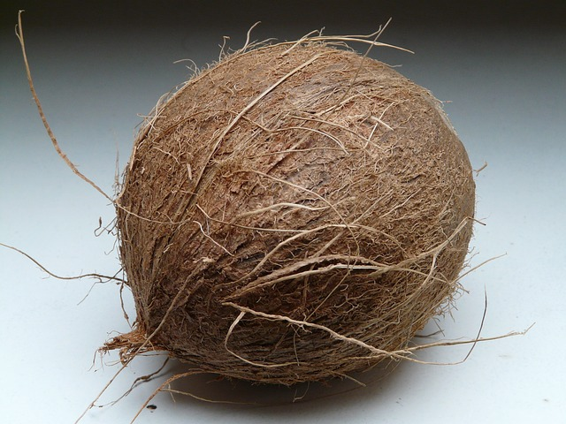 El coco Spanish translation of Coconut